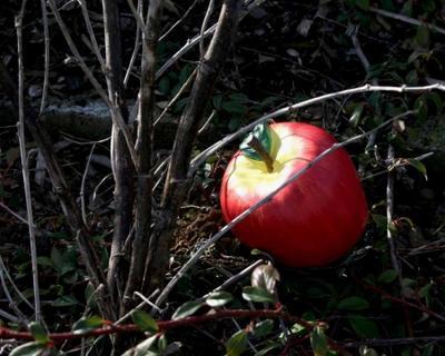 Apple geocache - complete kit - 3